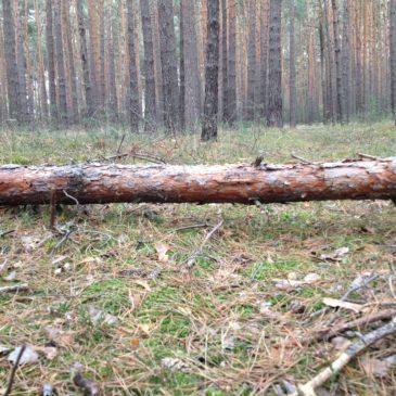 Wald Wälder en vogue